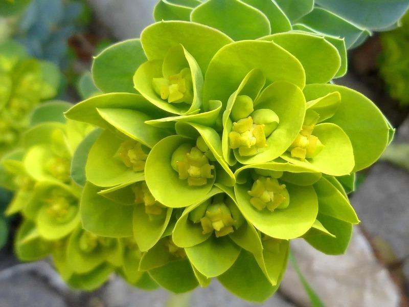 7 растений желтого цвета для яркой моноклумбы