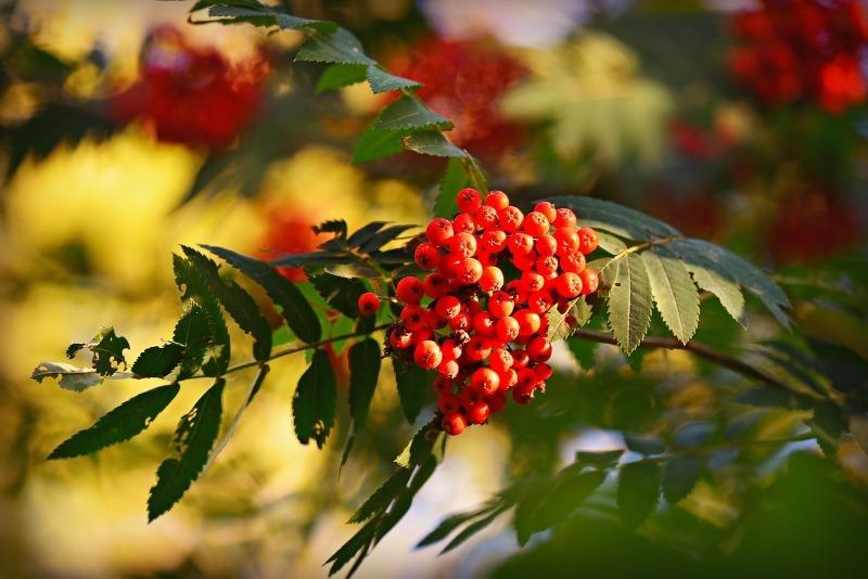 8 растений, в которых содержание витаминов больше, чем в остальных