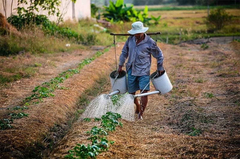 Какие типичные ошибки допускают дачники во время полива растений в жару