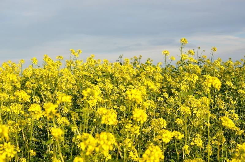 6 растений, которые сделают бедную почву плодородной