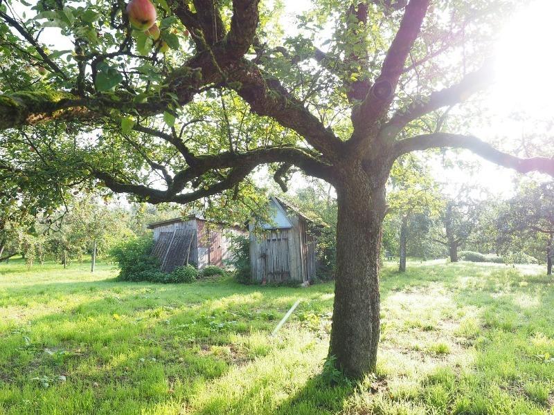 5 мест на дачном участке, где точно не стоит сажать деревья