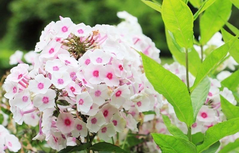 10 красивых растений, которые будут пышно цвести, даже если посадить их на глинистой почве