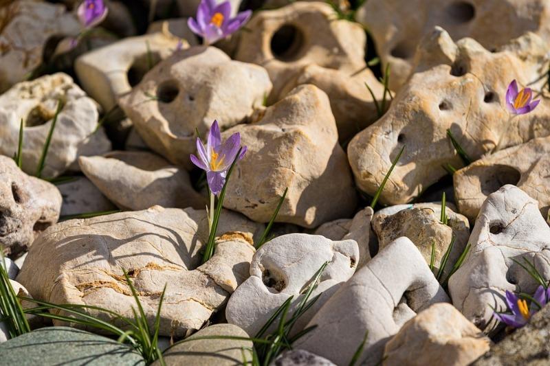 Если не хочется убирать камни: 7 растений превратят участок с булыжниками в красивый рокарий