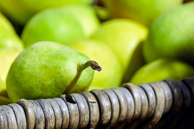 4 ошибки совершают при сборе яблок и груш, а потом жалуются, что плоды быстро портятся