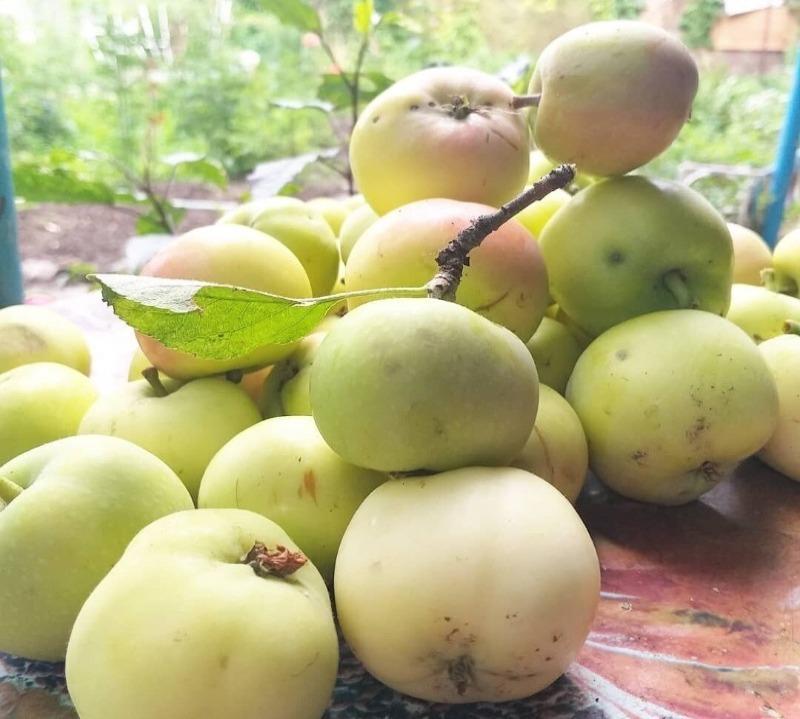 Какие сорта яблок содержат большое количество полезных веществ