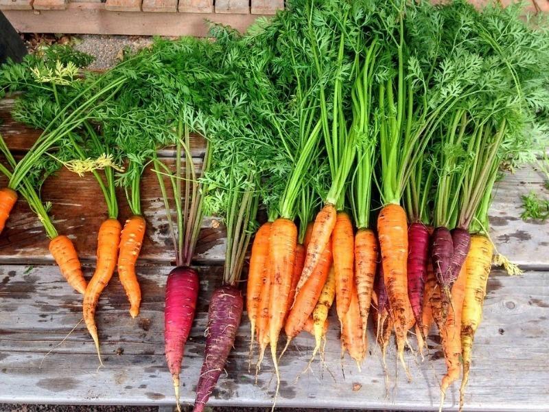 4 способа сохранить урожай моркови как можно дольше