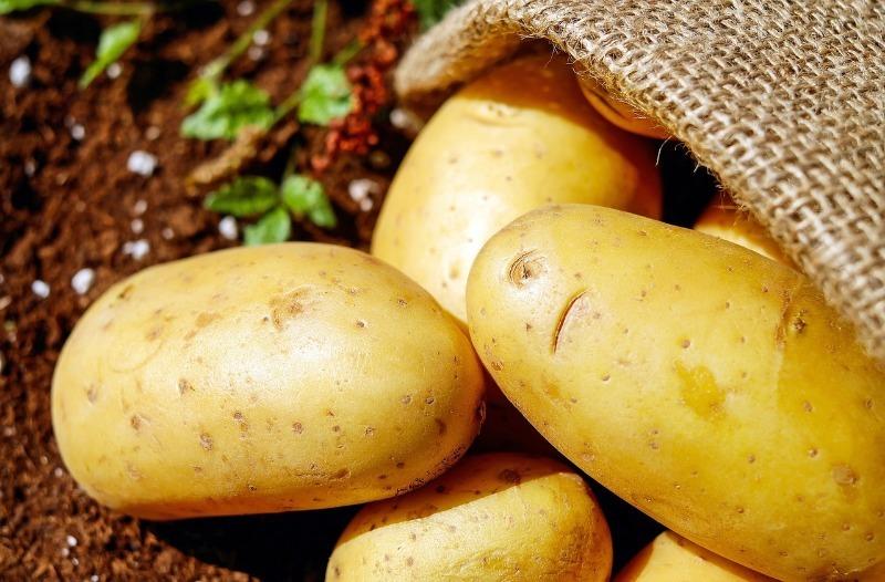 В 2020 году дачники повсеместно жалуются на плохой урожай картофеля: в чем причина
