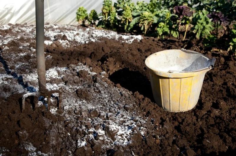 7 простых средств для закисления почвы