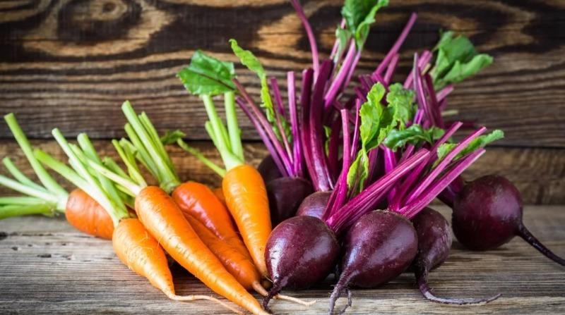 Почему уборка моркови и свеклы в один день выдает с головой плохого дачника
