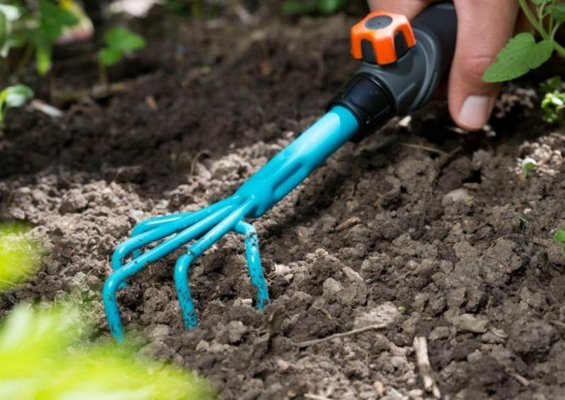 Как спасти растение на грядке, если вы его сильно перелили