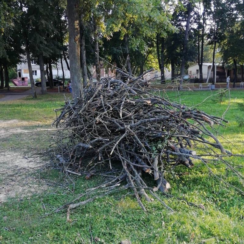 Как нельзя уничтожать срезанные ветки – можно поссориться с соседями или получить штраф