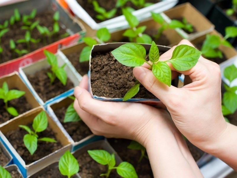 5 признаков того, что растения поливаются слишком жесткой водой