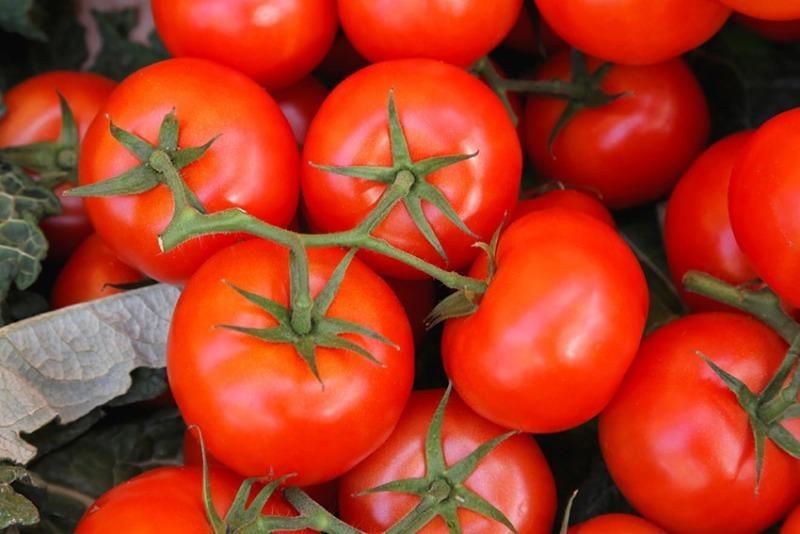 8 сортов томата, подходящих для посева в октябре