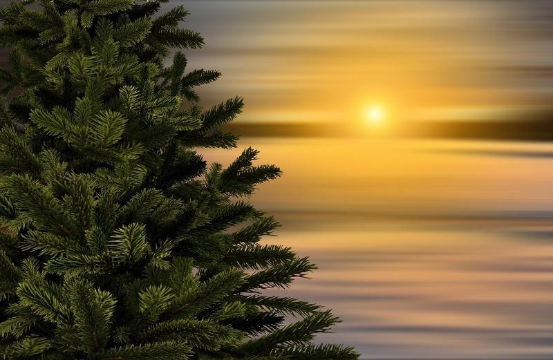 Живые фильтры: какие деревья отлично очищают воздух от вредных веществ