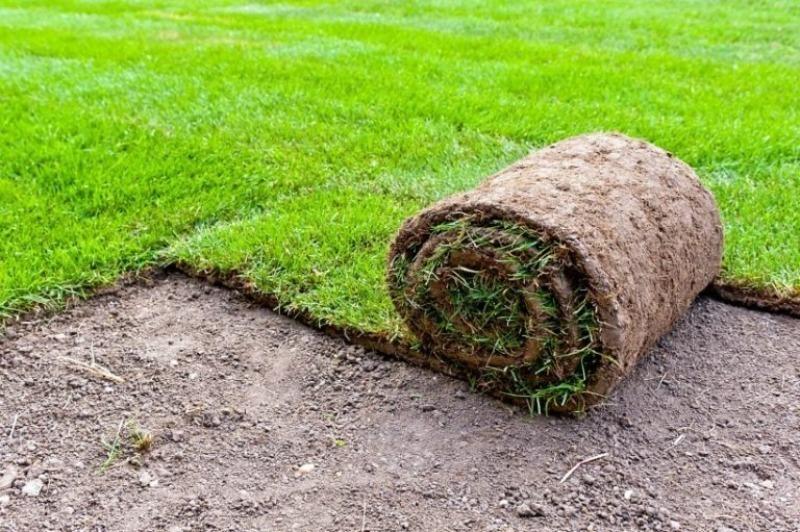 Английский, мавританский и еще 7 видов газона: какой подходит именно для вашей дачи