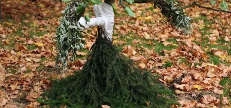 4 способа защитить стволы деревьев, чтобы голодные грызуны не повредили кору