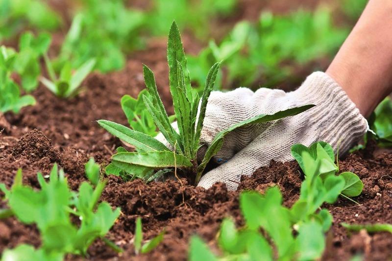 Что весной произойдет на участке дачника, который поленился перепахать почву осенью