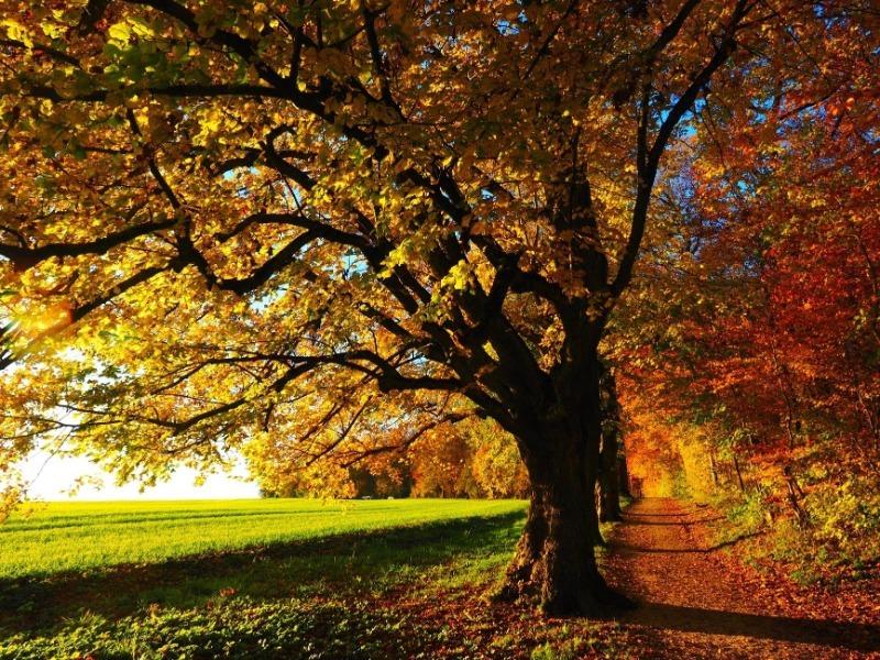 3 способа определить, требуется ли полив вашим плодовым деревьям поздней осенью