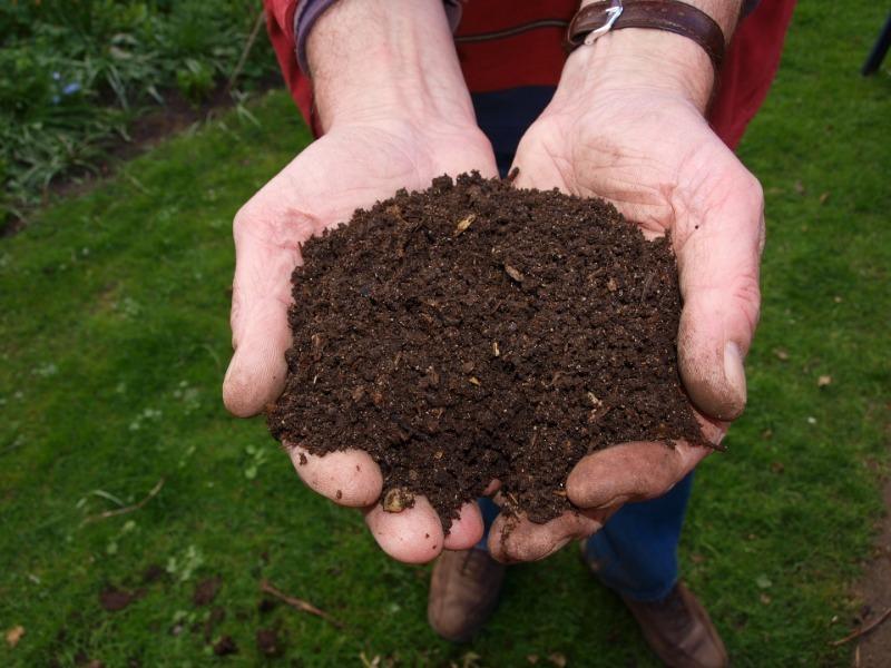 7 бесплатных средств, которыми можно укрыть растения на даче и не тратиться на специальные пленки