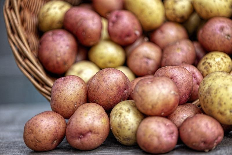 Какими должны быть клубни картофеля, который выдержит подзимнюю посадку
