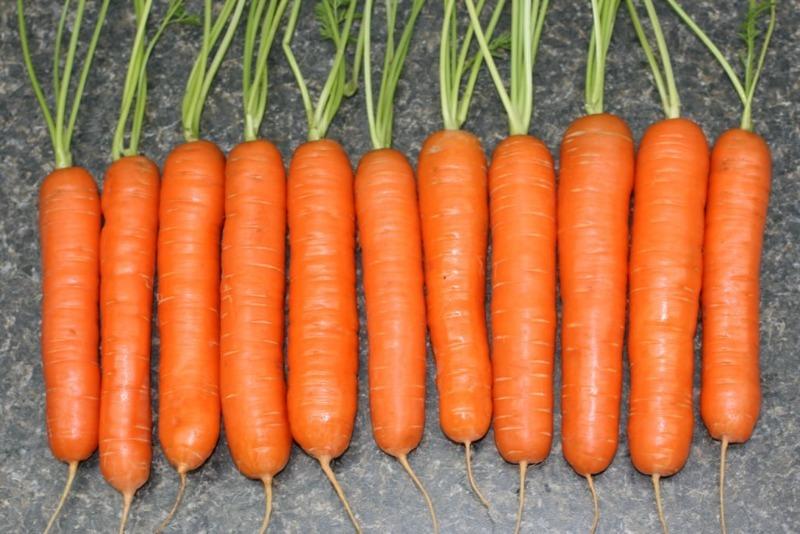 Какую морковь можно посеять в октябре-ноябре, чтобы она спокойно пережила зиму