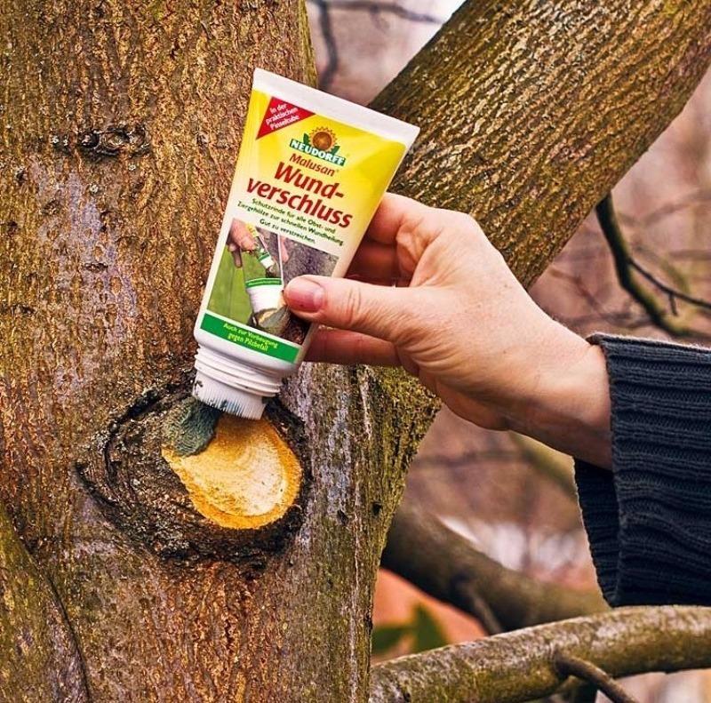 Ученые Института садоводства назвали 6 средств, которые полностью заживляют раны деревьев