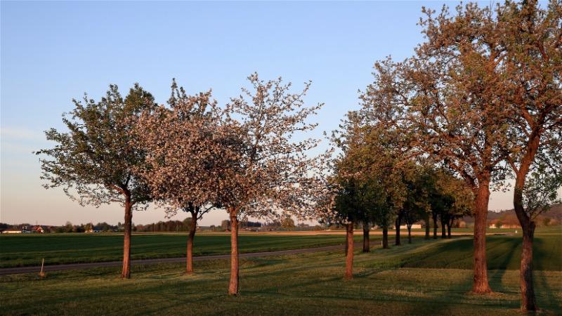 Что лучше — перекапывать землю у стволов деревьев или сеять траву