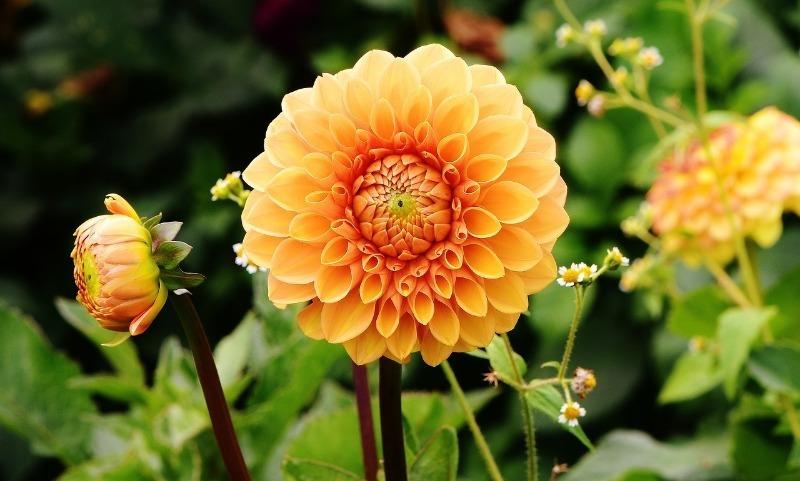 7 цветов, которые продолжают цвести, даже когда люди уже надевают теплые куртки