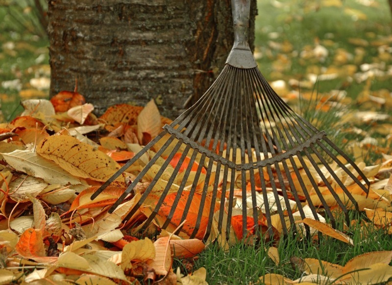 5 дел с садовыми деревьями и кустарниками, которые важно успеть до середины декабря