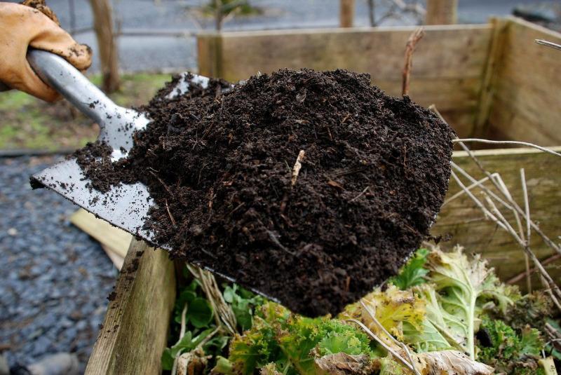 Какие «добавки» нужно осторожно вносить в грунт для рассады, а то и вовсе отказаться от них