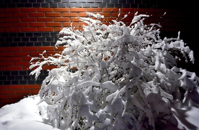 Что на даче нужно спасать от мокрого снега, который часто идет в декабре