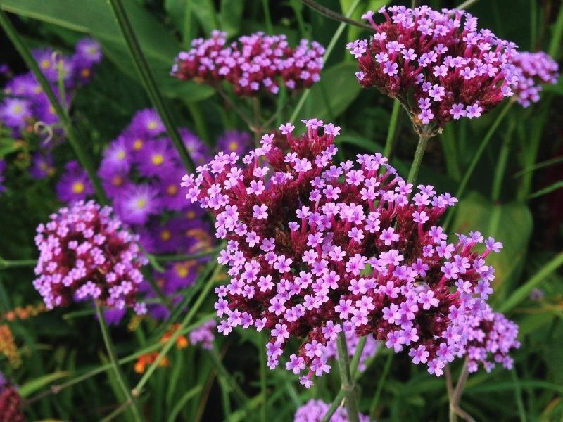 5 цветов, рассаду для которых начинают выращивать уже в декабре