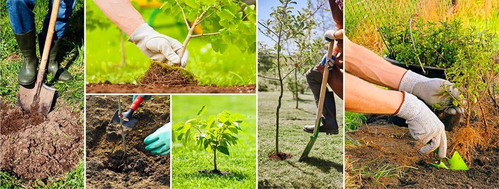 Посадка деревьев осенью — сроки, правила, пошаговые инструкции