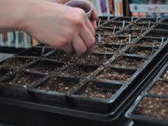 Подготовка земли и семян к посеву